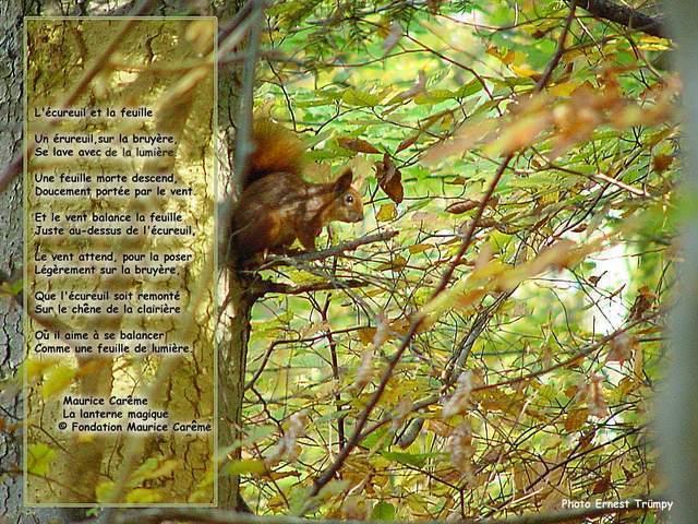 court poème sur la nature